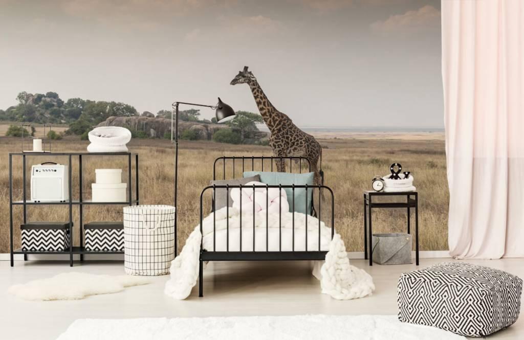 Djur Giraff på en savann 7