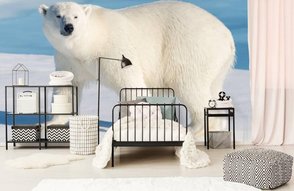 Övriga Isbjörn 1