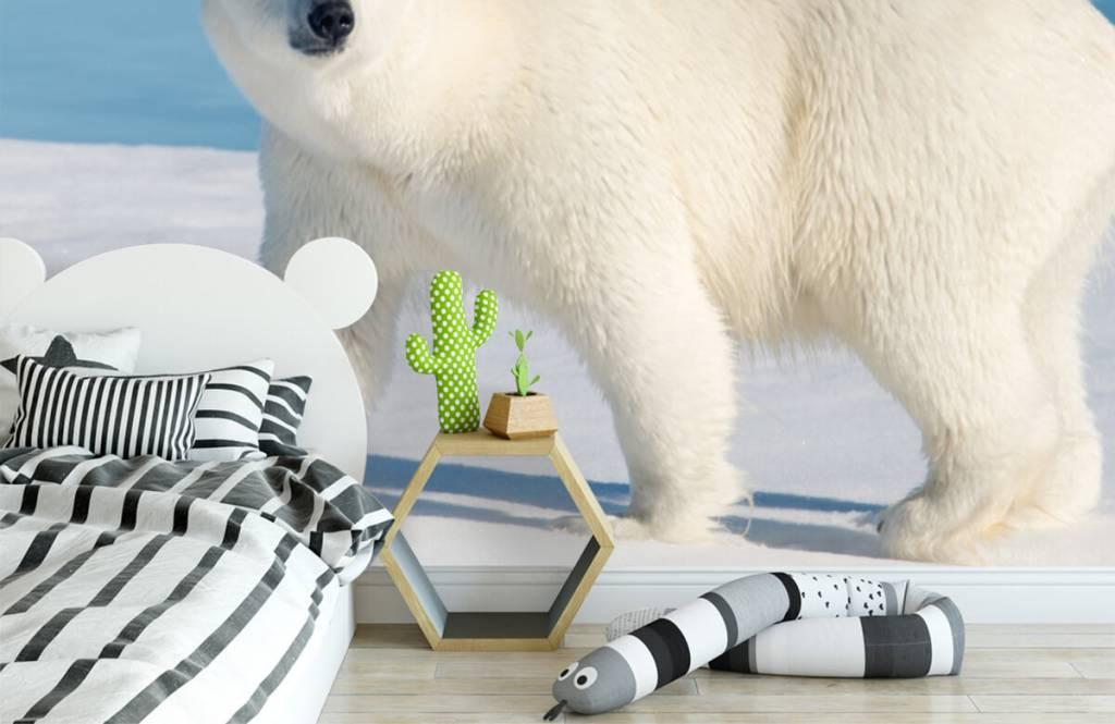 Övriga Isbjörn 2
