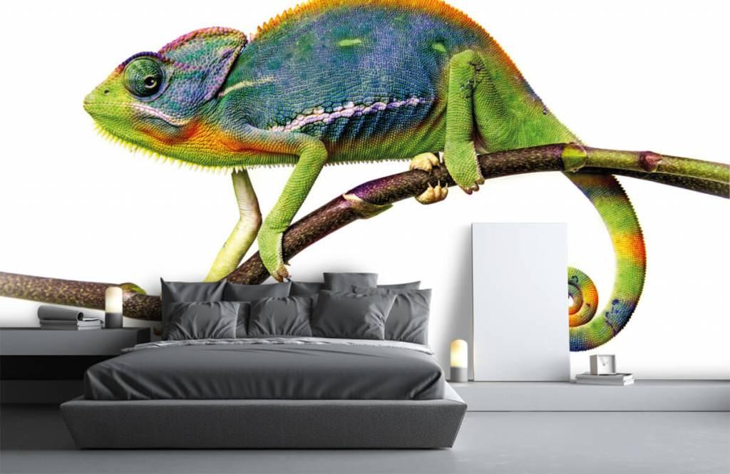 Övriga Kameleont 3
