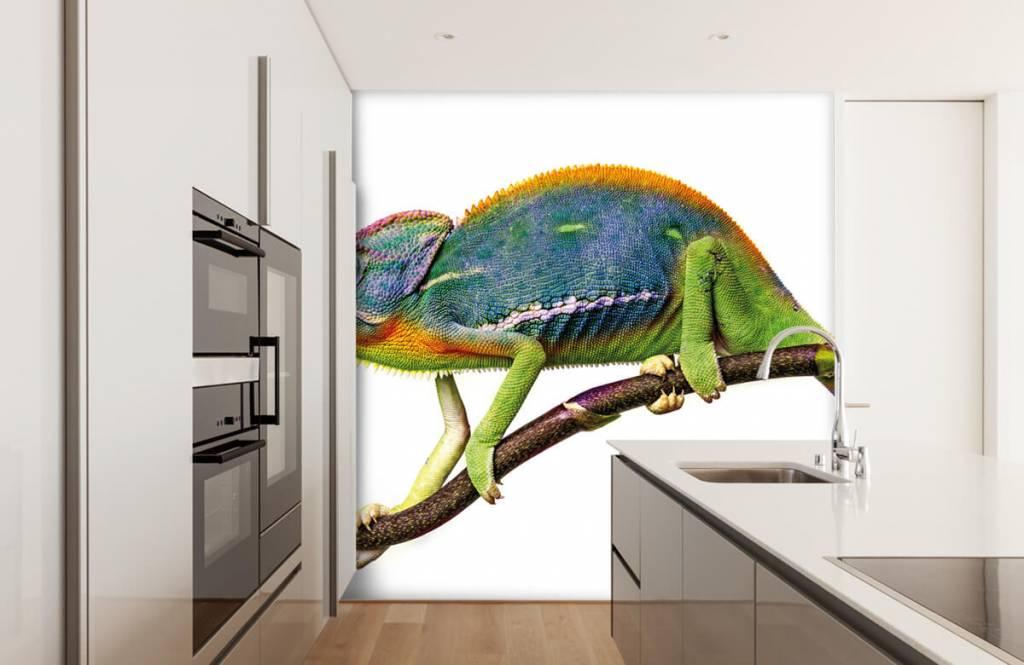 Övriga Kameleont 4