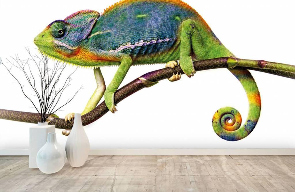 Övriga Kameleont 8