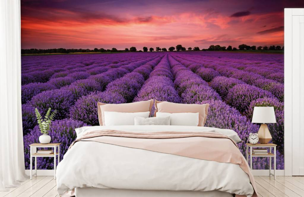 Blommor Lavendel fält 1