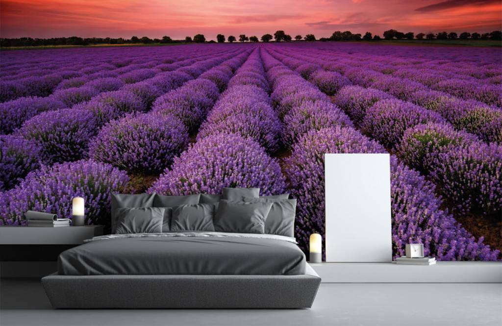 Blommor Lavendel fält 2