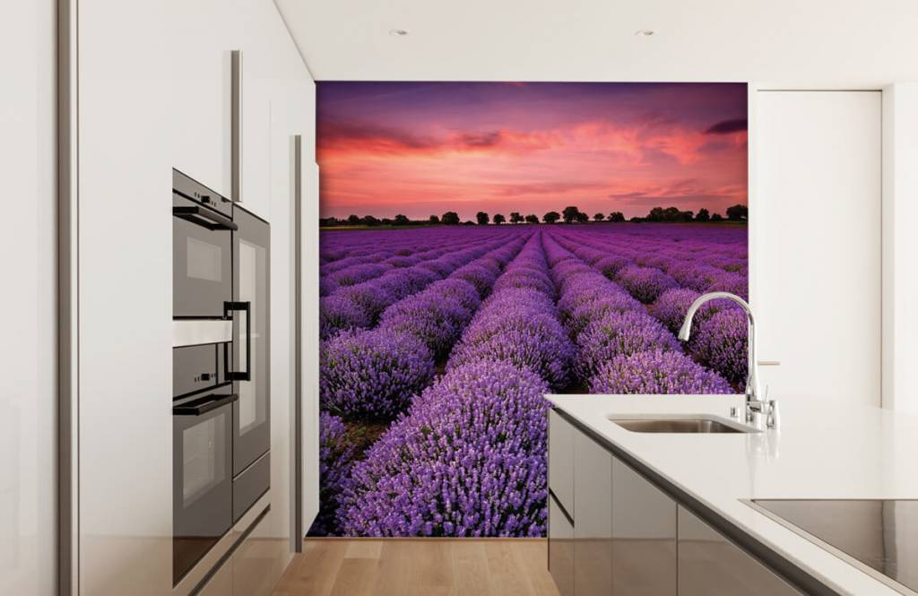 Blommor Lavendel fält 3