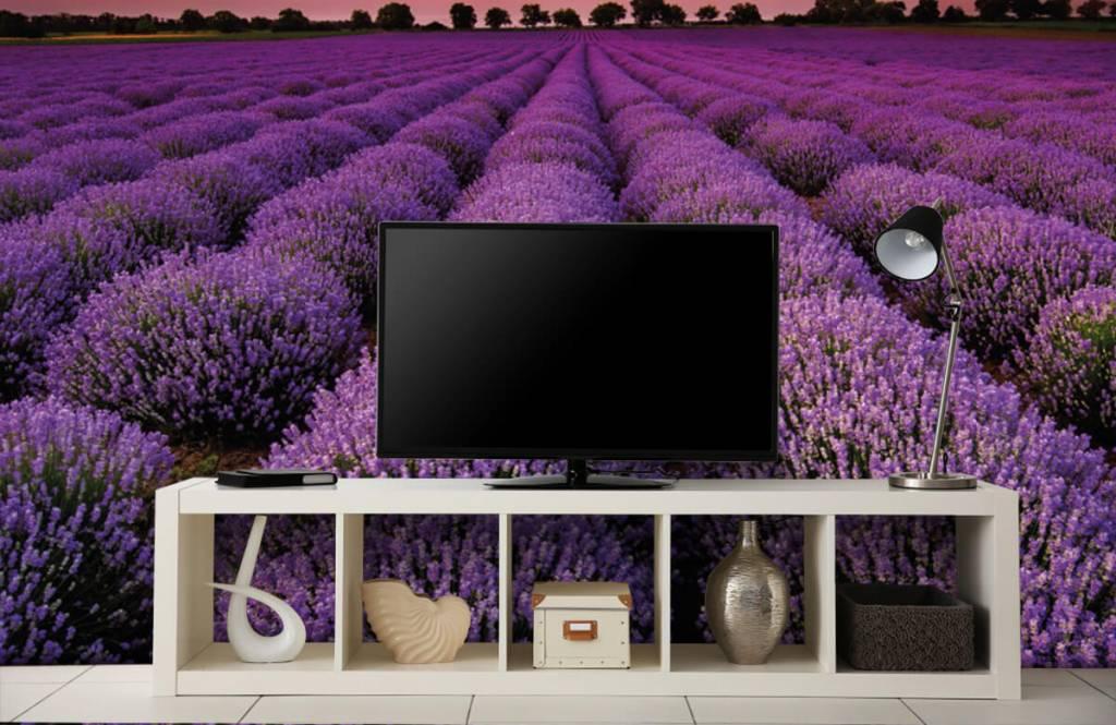 Blommor Lavendel fält 4