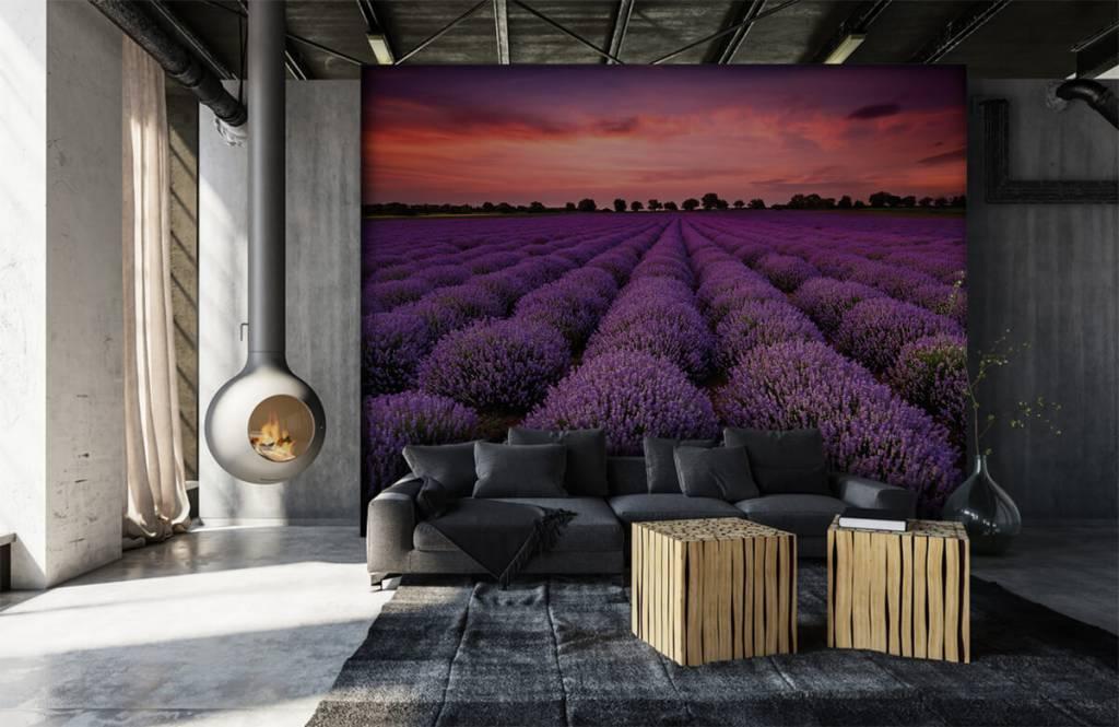Blommor Lavendel fält 6