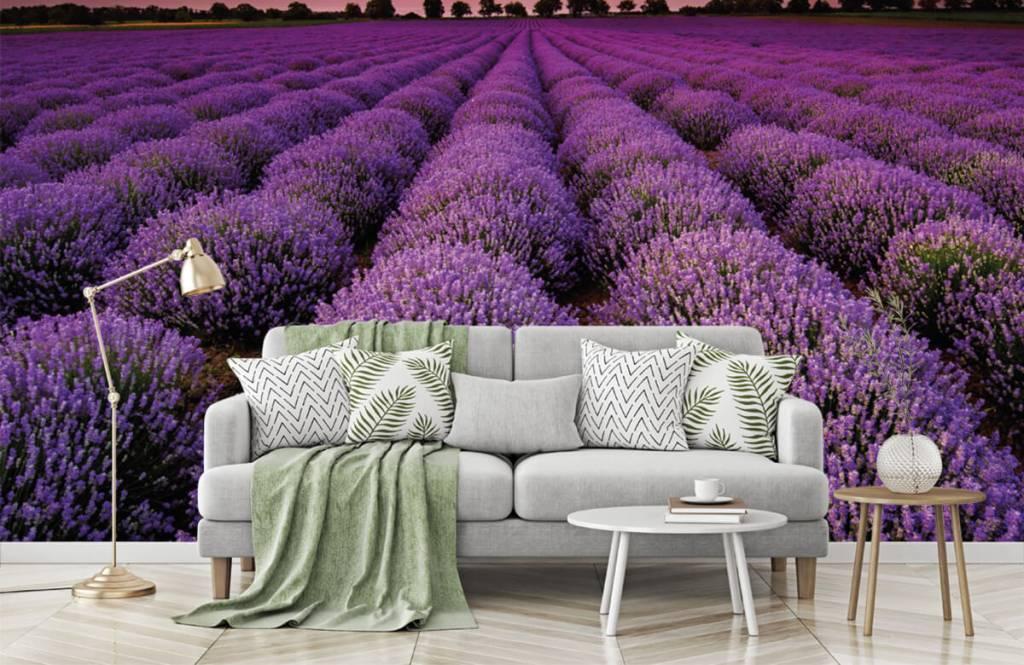 Blommor Lavendel fält 7