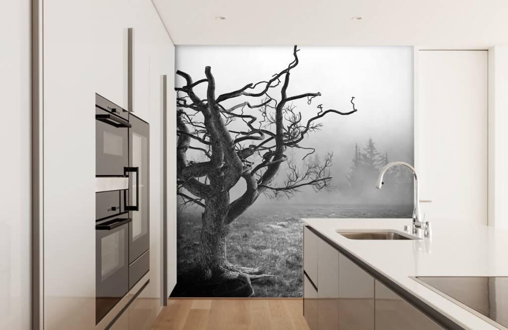 Svartvit tapet Elegant träd 4