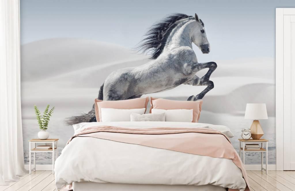 Hästar porträtt häst 3