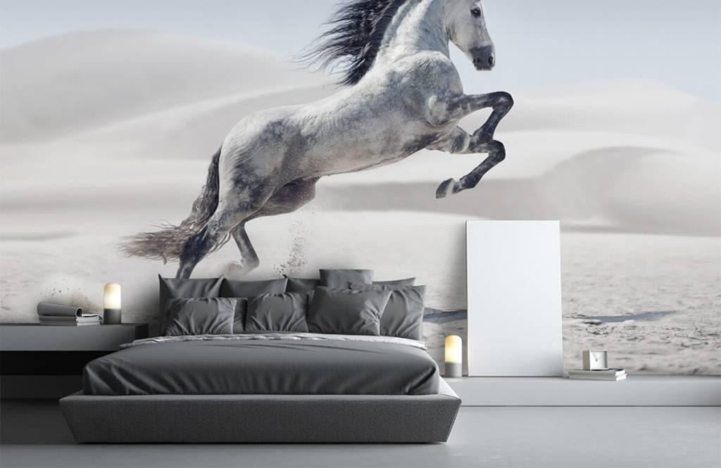 Hästar porträtt häst 4