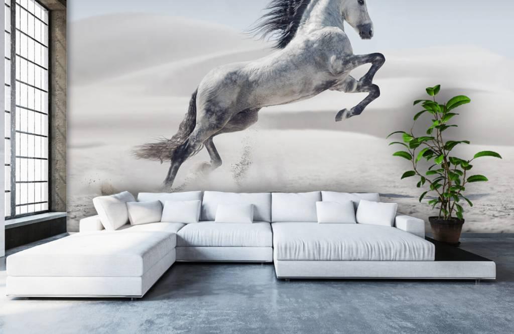 Hästar porträtt häst 7