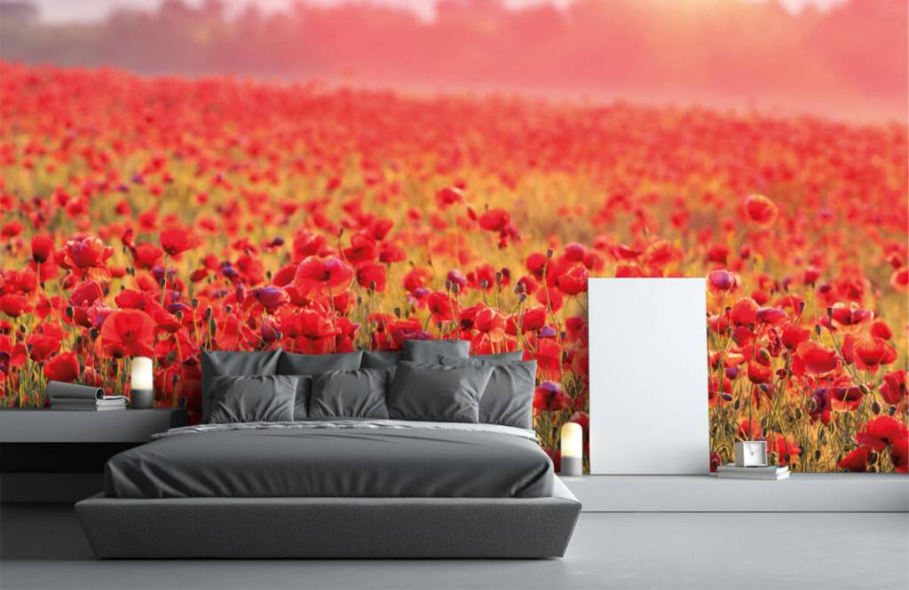 Blommor Fält fullt av vallmo 1