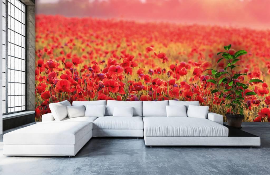Blommor Fält fullt av vallmo 5