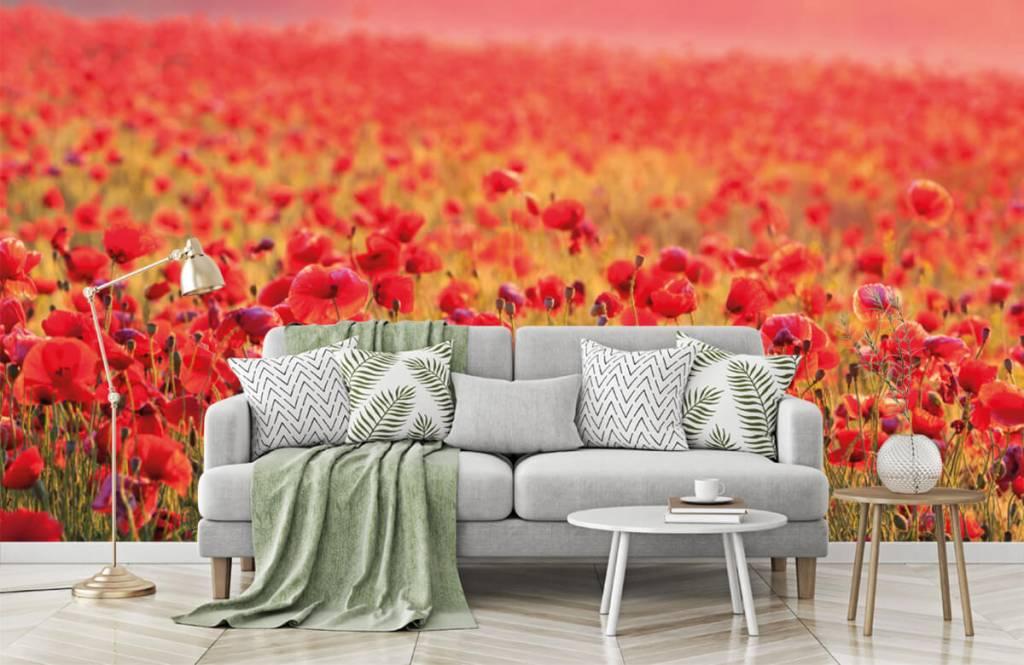 Blommor Fält fullt av vallmo 7