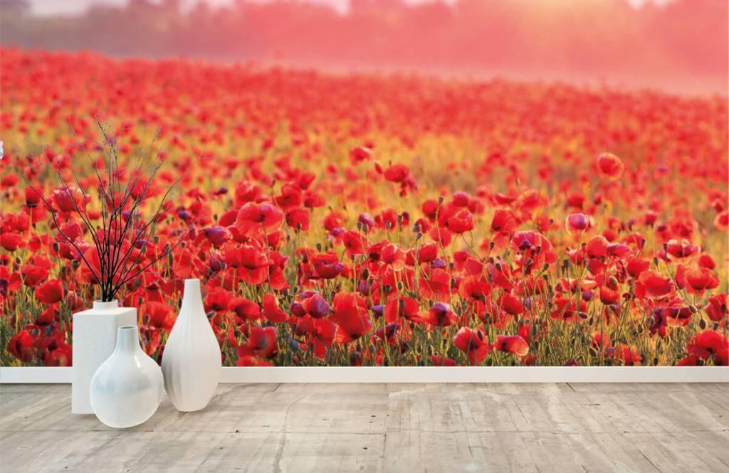 Blommor Fält fullt av vallmo 8