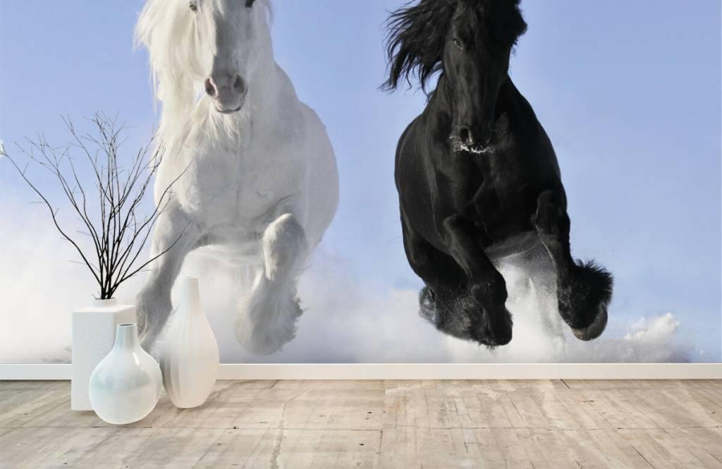 Hästar Vit och en svart häst 1