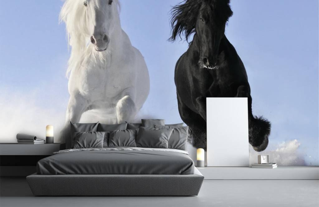 Hästar Vit och en svart häst 3