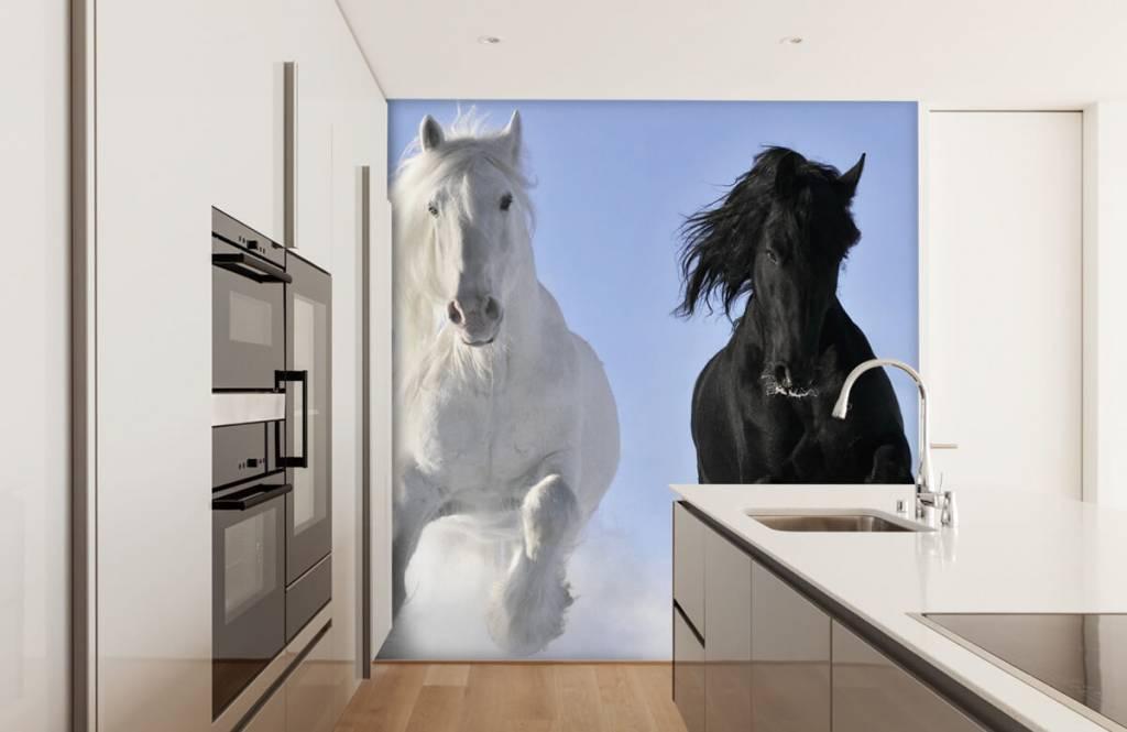 Hästar Vit och en svart häst 4