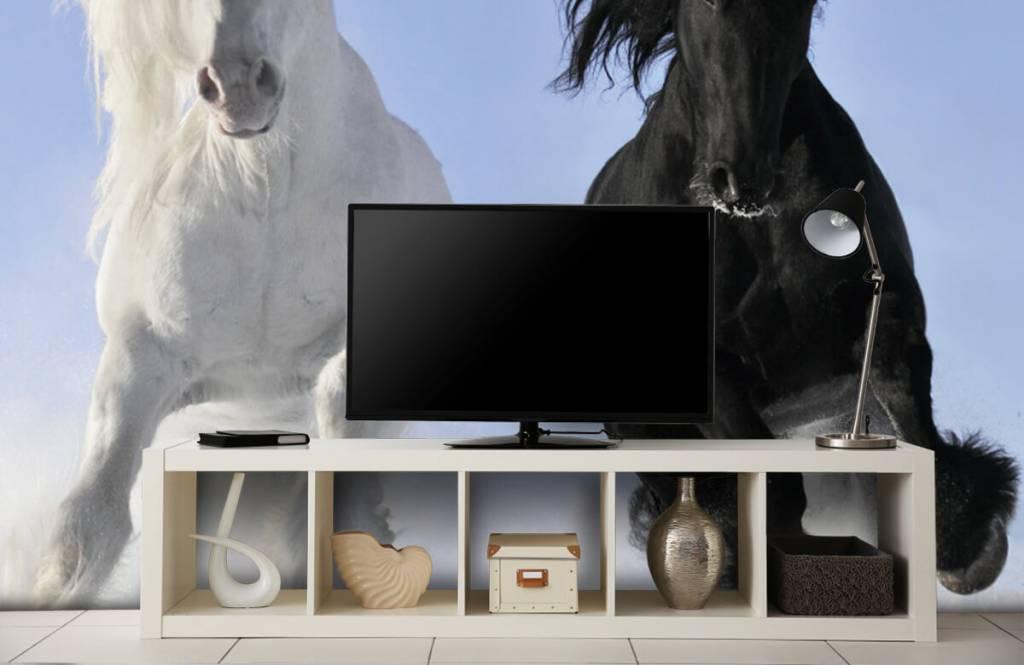 Hästar Vit och en svart häst 5