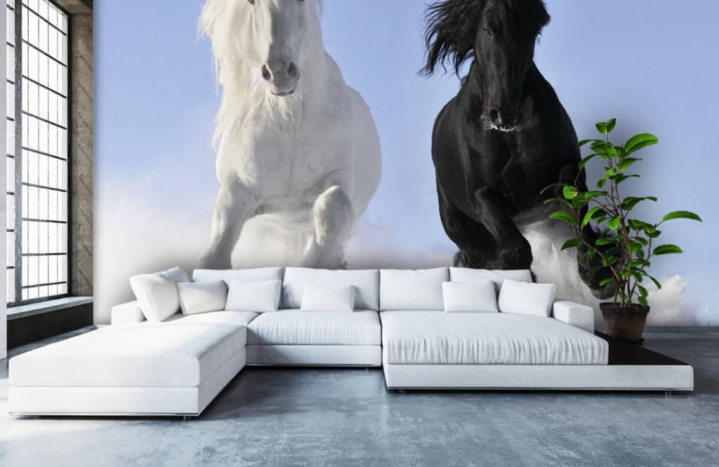 Hästar Vit och en svart häst 6