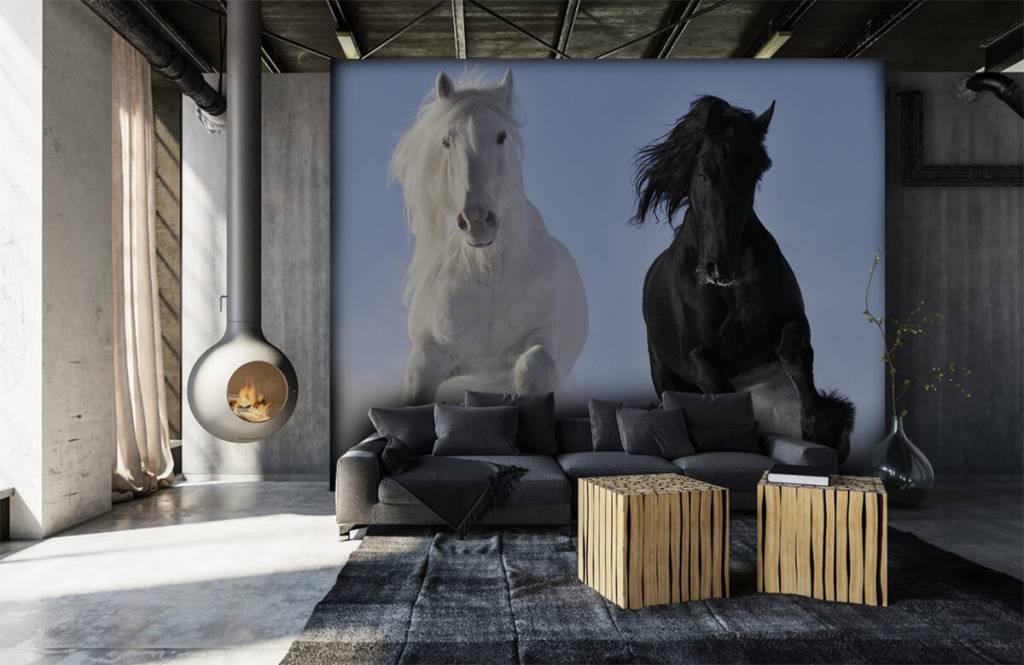 Hästar Vit och en svart häst 7