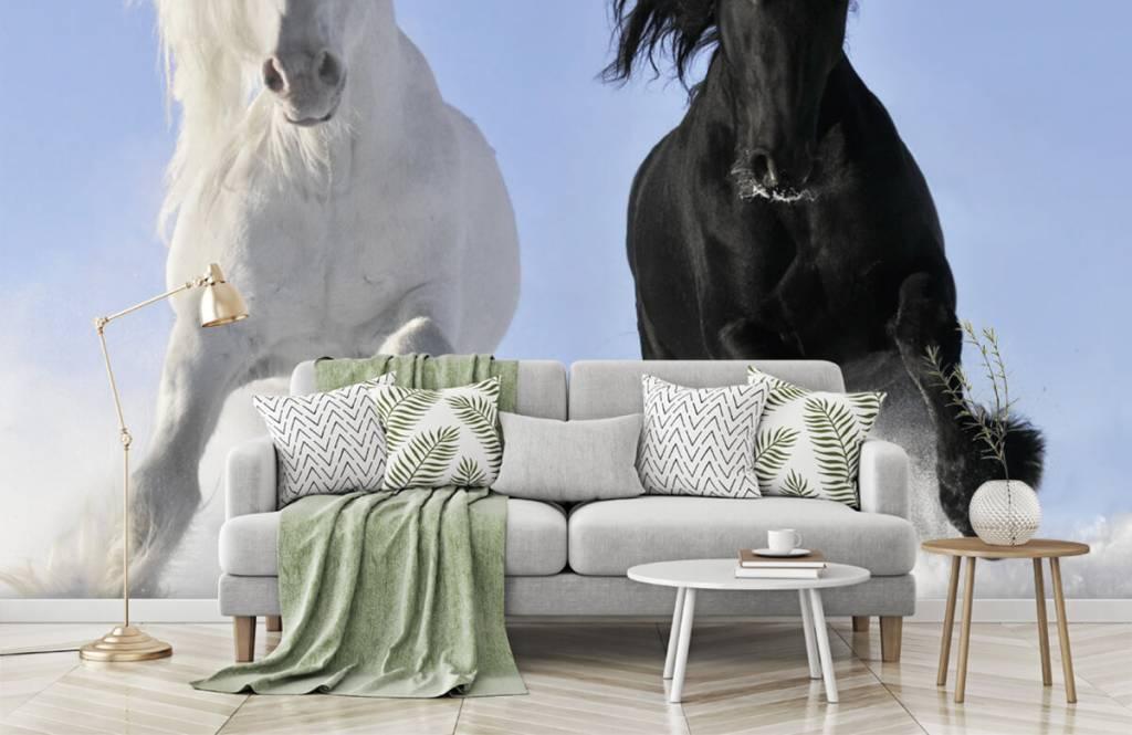 Hästar Vit och en svart häst 8