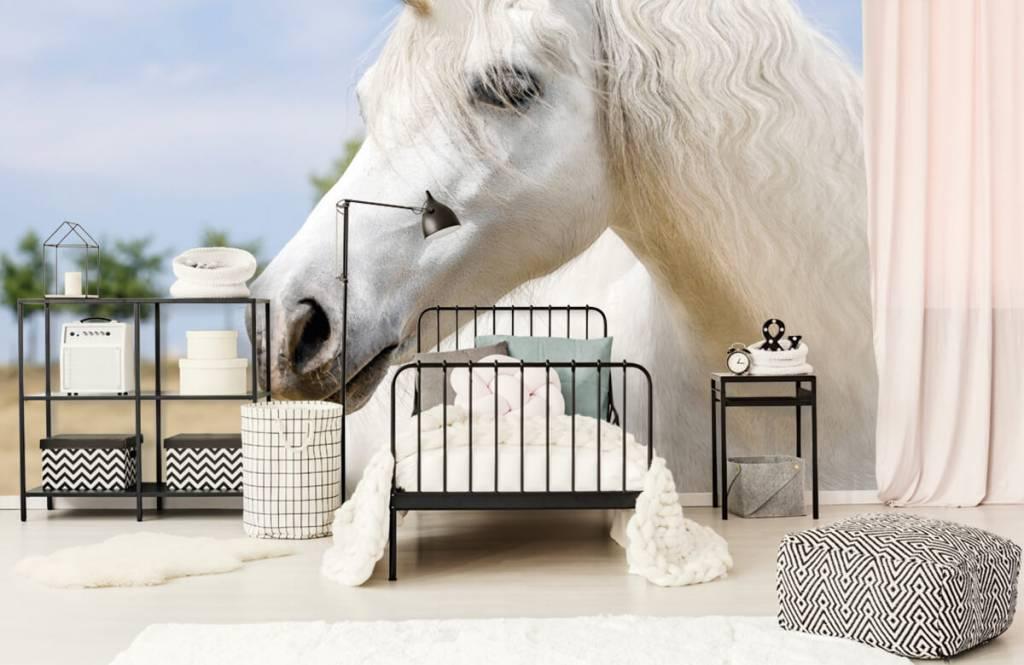 Hästar Vit enhörning 2