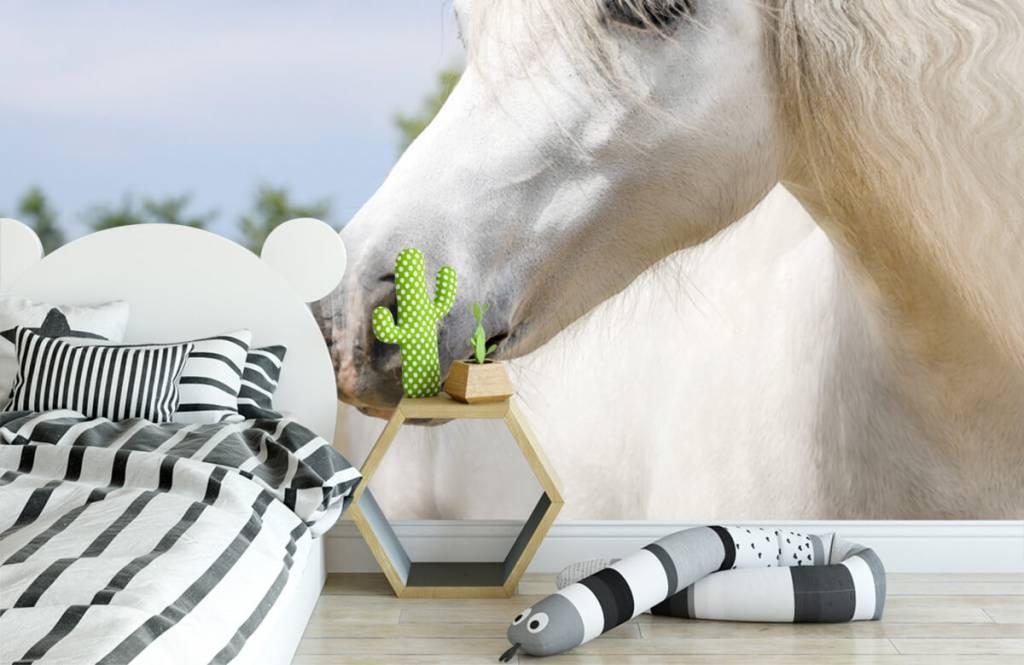Hästar Vit enhörning 3