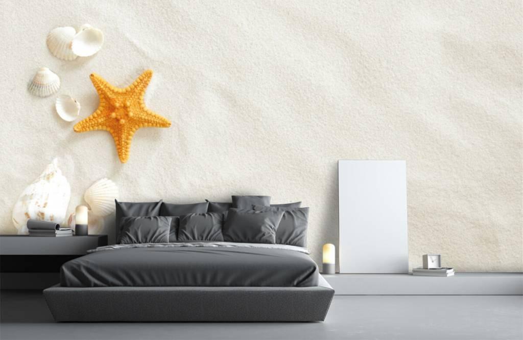 Stränder Sjöstjärna på vit sand 3