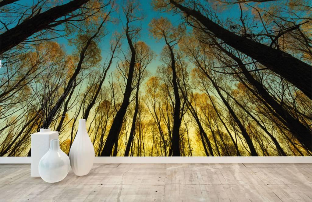 Skog tapet Soluppgång mellan höga träd 8