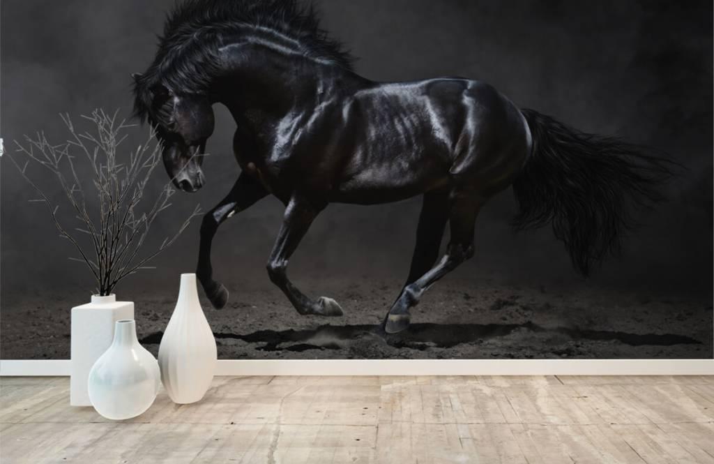 Hästar Svart hingst 1
