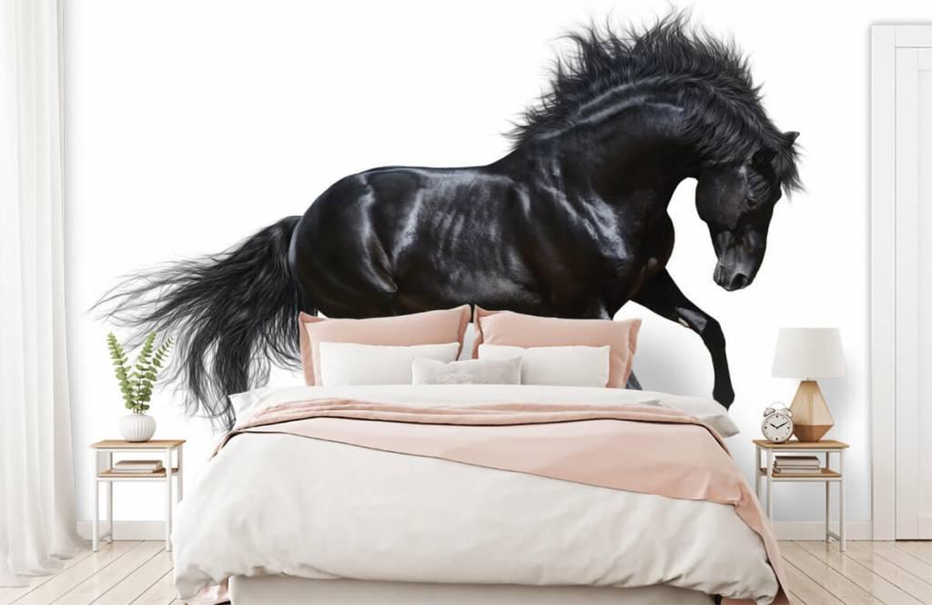 Hästar - Vacker svart hingst 2