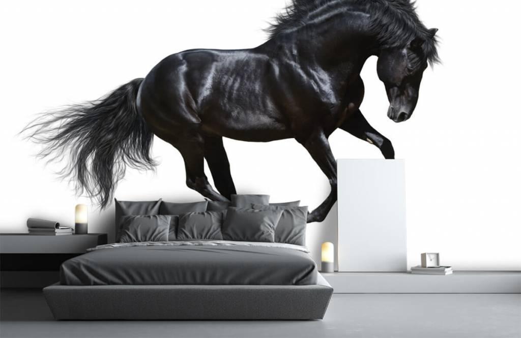Hästar - Vacker svart hingst 3