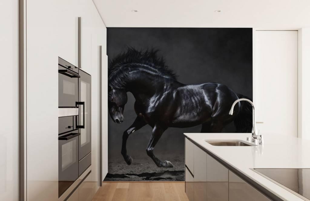 Hästar Svart hingst 4
