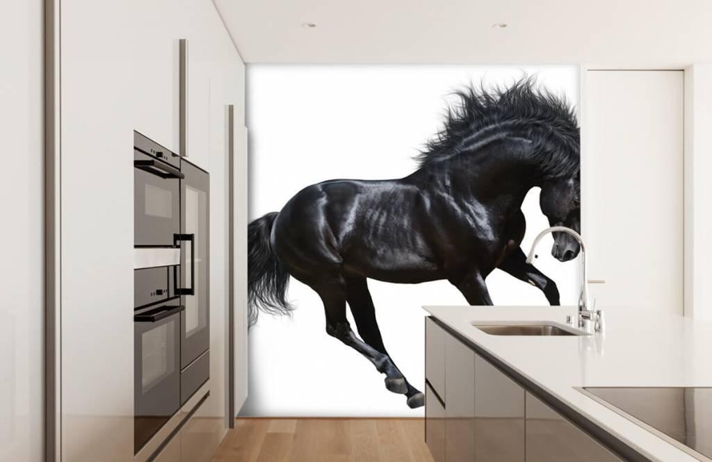 Hästar - Vacker svart hingst 4