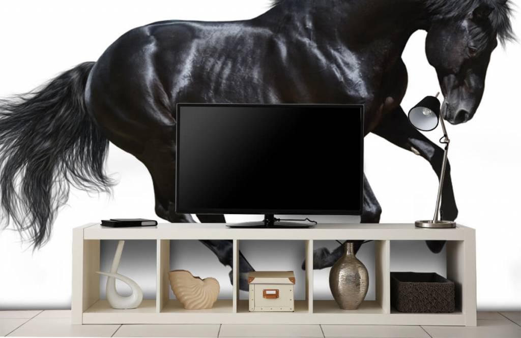 Hästar - Vacker svart hingst 5