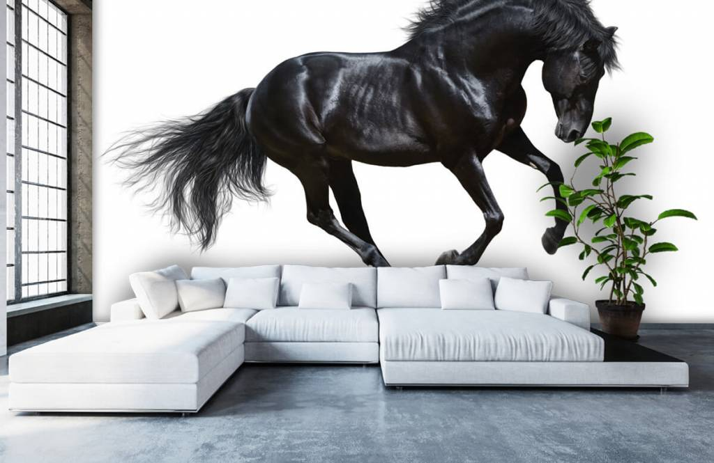 Hästar - Vacker svart hingst 6