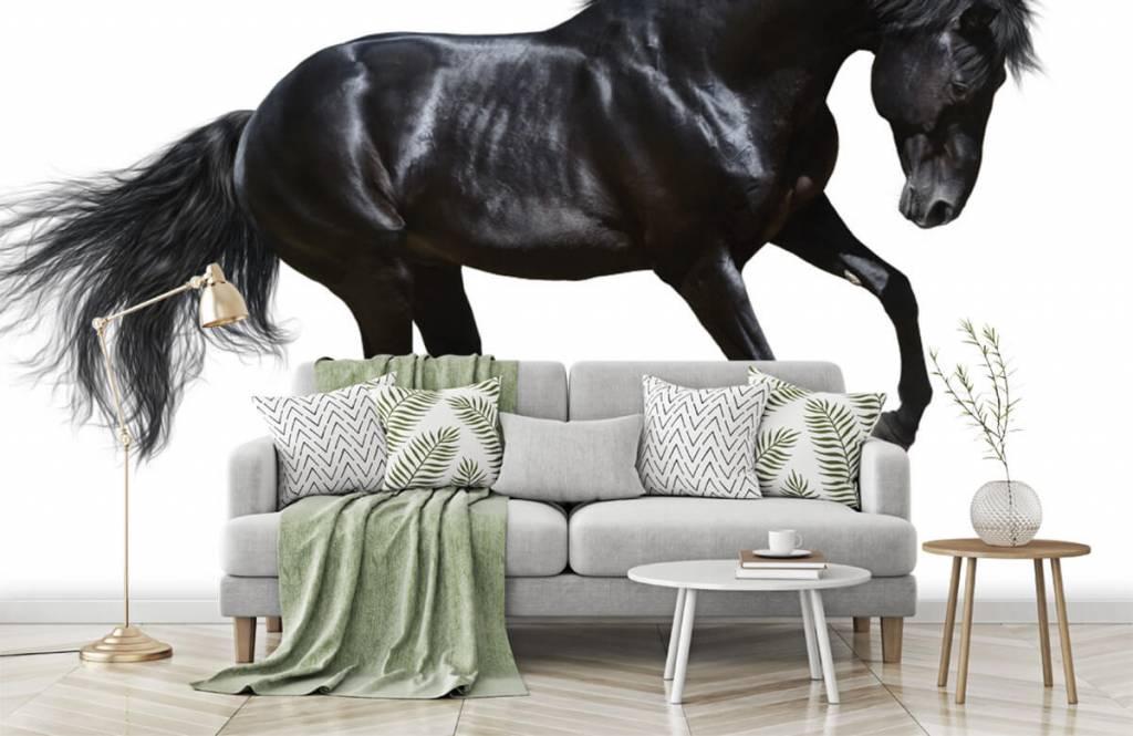 Hästar - Vacker svart hingst 7