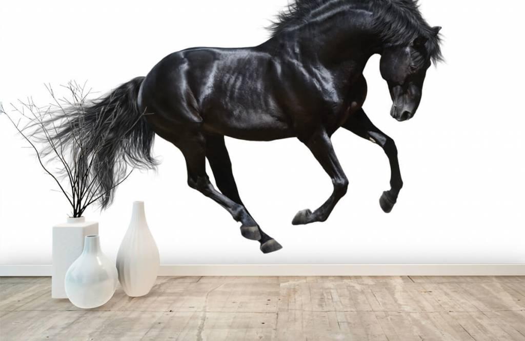 Hästar - Vacker svart hingst 8