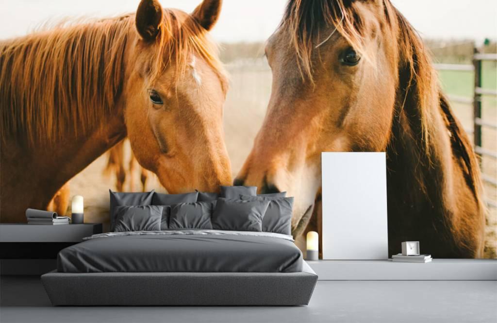 Hästar Två hästar 2
