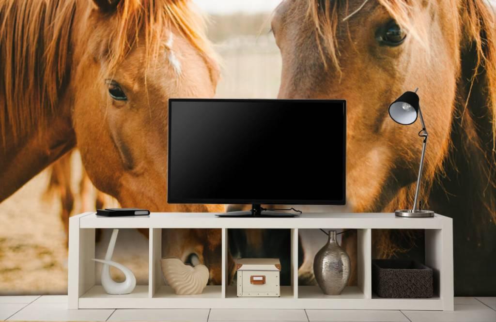 Hästar Två hästar 3