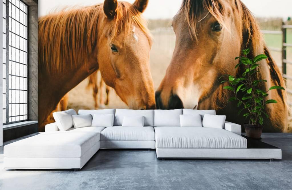 Hästar Två hästar 4