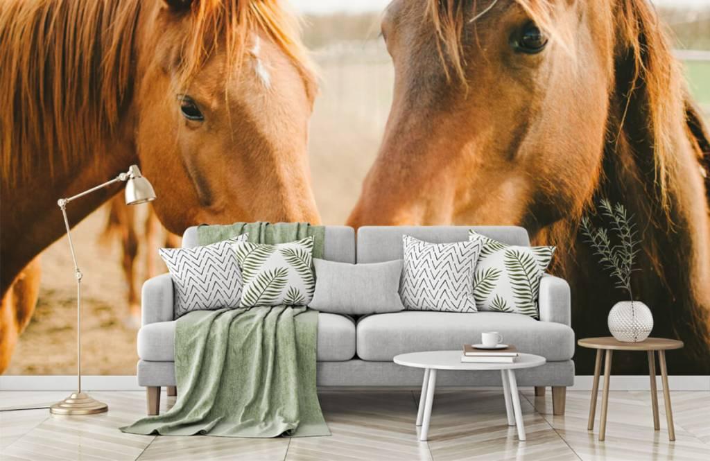 Hästar Två hästar 5