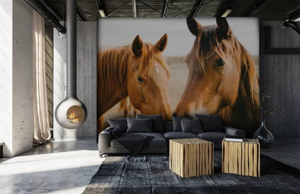 Hästar Två hästar 6