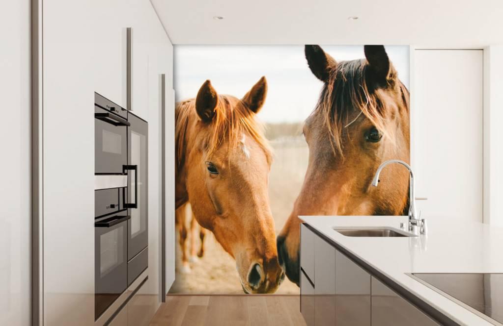 Hästar Två hästar 7