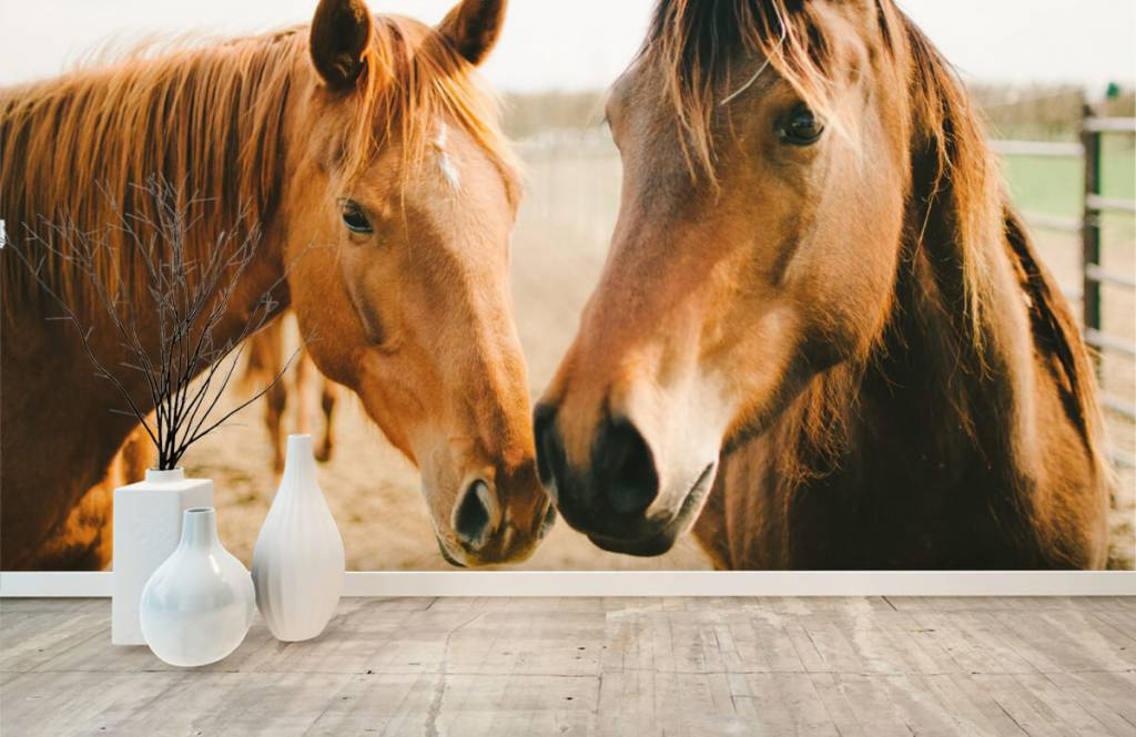 Hästar Två hästar 8