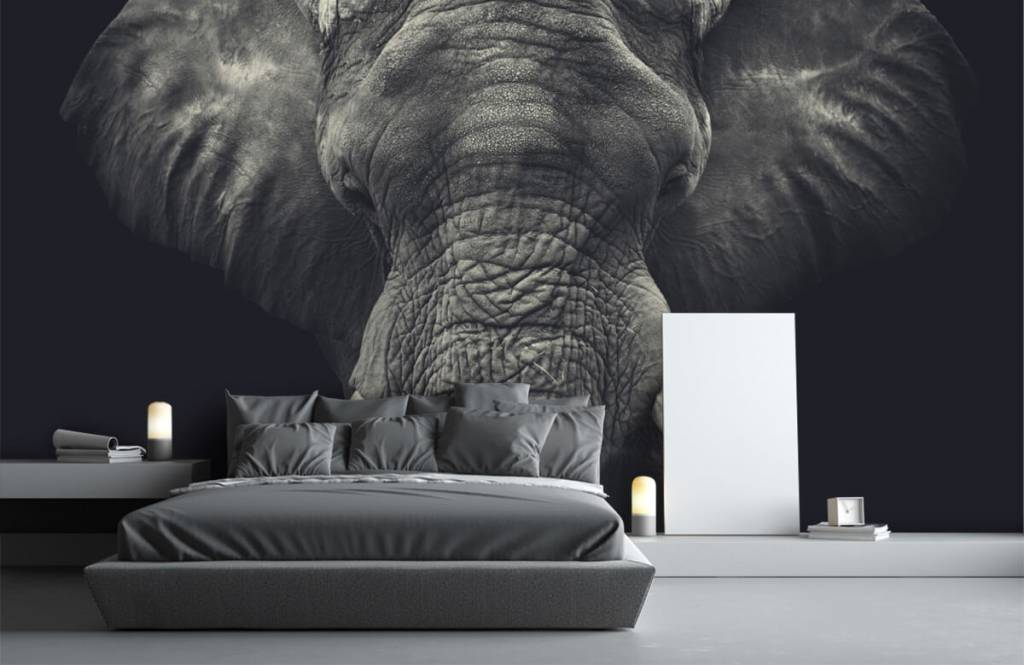 Elefanter Närbild av en elefant 1