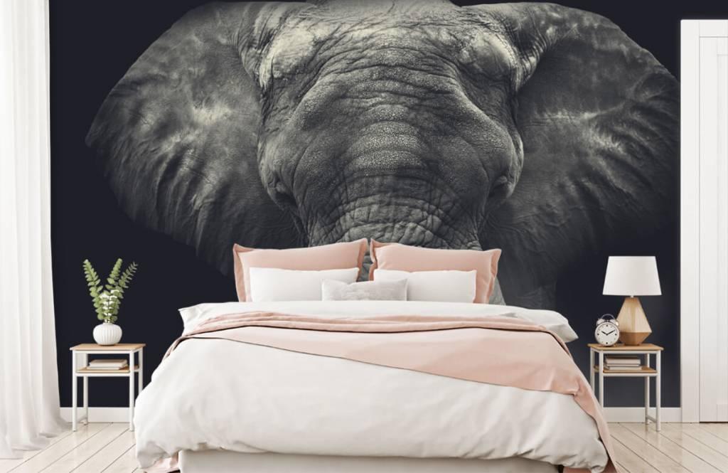 Elefanter Närbild av en elefant 2