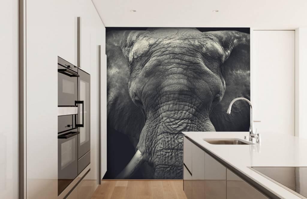Elefanter Närbild av en elefant 3